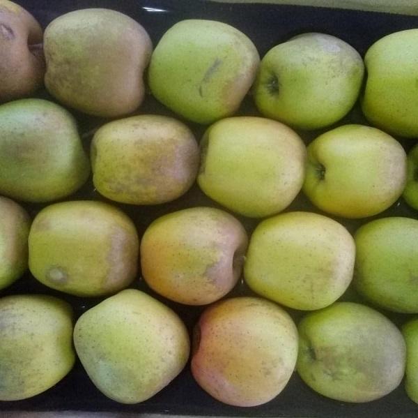 pomme-sainte-germaine-auvergne