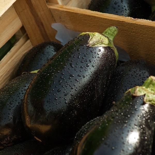 aubergines-bio