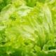 salade-vrac-bio