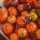 tomates-anciennes-bio