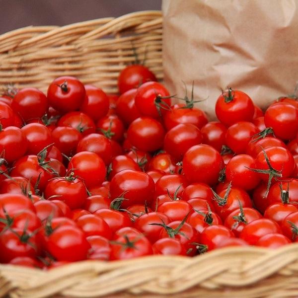 tomate-cerise-bio