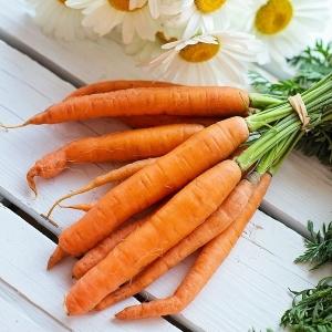 carottes-bio