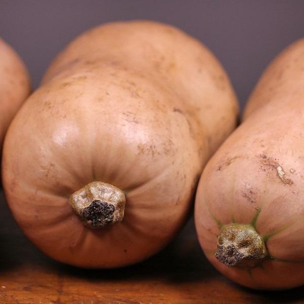 butternut-bio