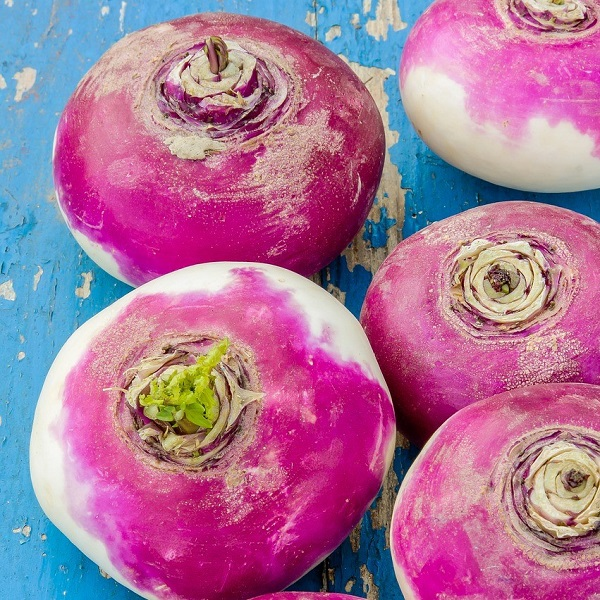 navet-violet-bio